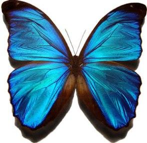 6156butterfly