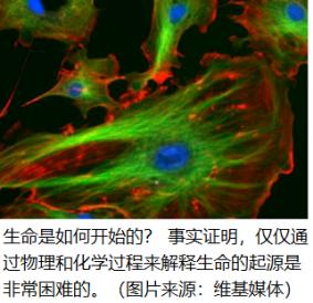 fluorescent cells